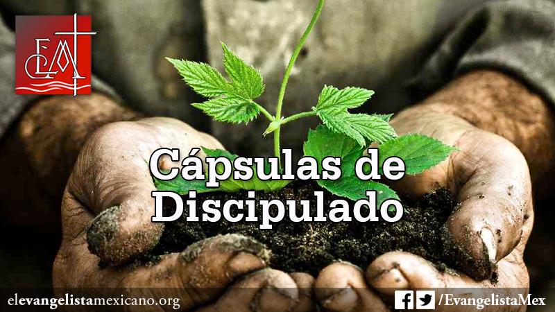 caps de discip